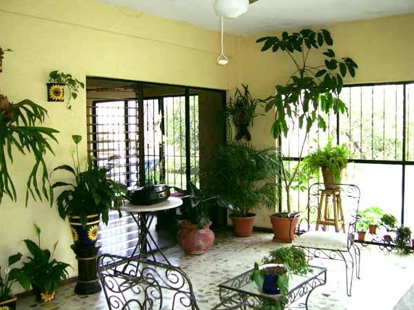 Piante da appartamento guida completa - Finestre in pianta ...