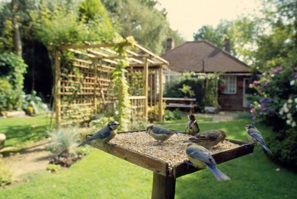 Birdgardening: attirare uccelli in giardino