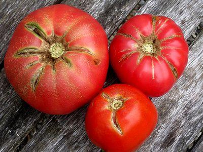 le malattie dei pomodori