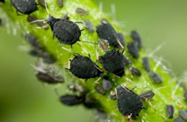 insetti e animali dannosi per l'orticoltura