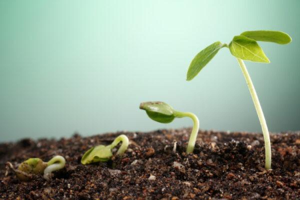 la crescita delle piante