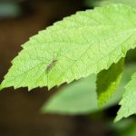 Come allontanare le zanzare dal giardino