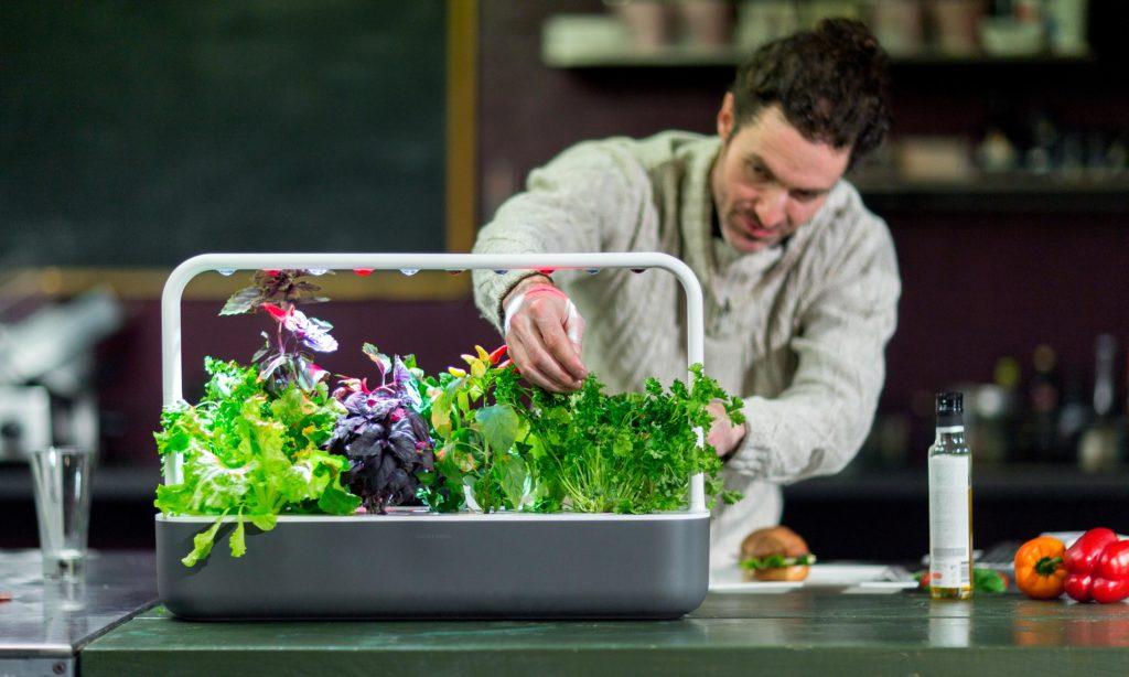 Come realizzare un orto indoor