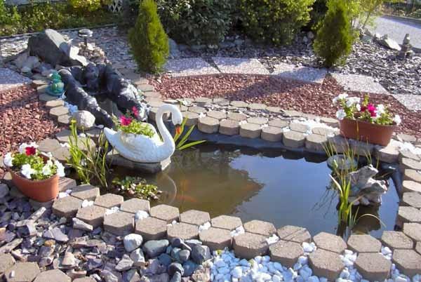 Costruire un laghetto da giardino come fare for Vendita pesci da laghetto online