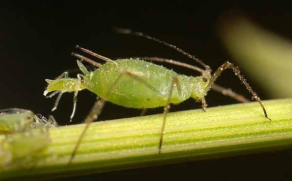 Combattere i parassiti delle piante