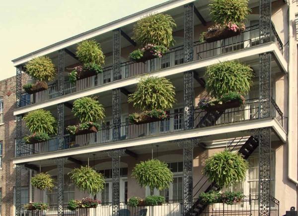 Piante da terrazzo: scelta
