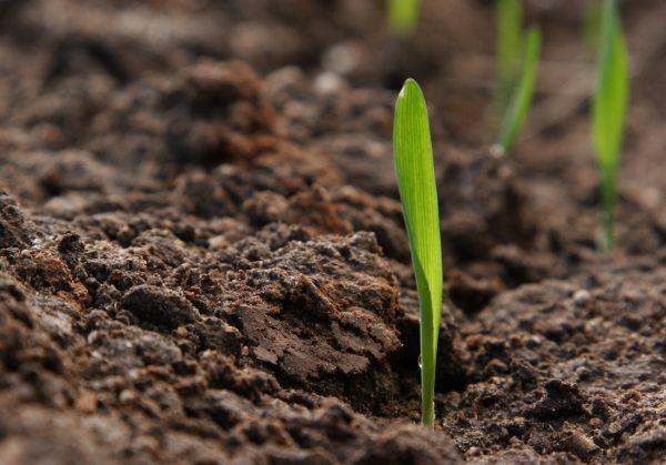 le diverse qualità di terreno