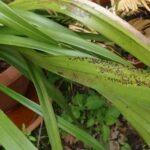 Le piante e le possibili malattie