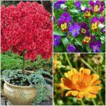 6 fiori bellissimi da piantare in primavera