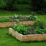 Come realizzare un orto